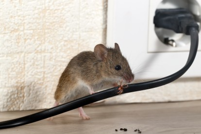 Pest Control in Abbots Langley, Bedmond, WD5. Call Now! 020 8166 9746